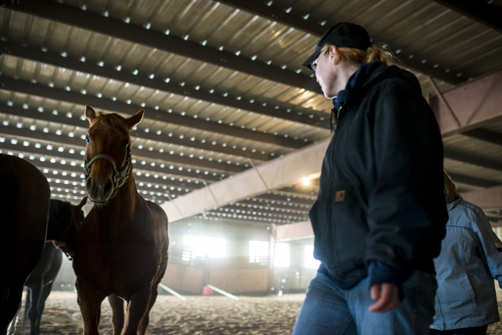 Veterans corral horses to take rein of own lives